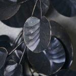 Kranz Eukalyptus, Eisen