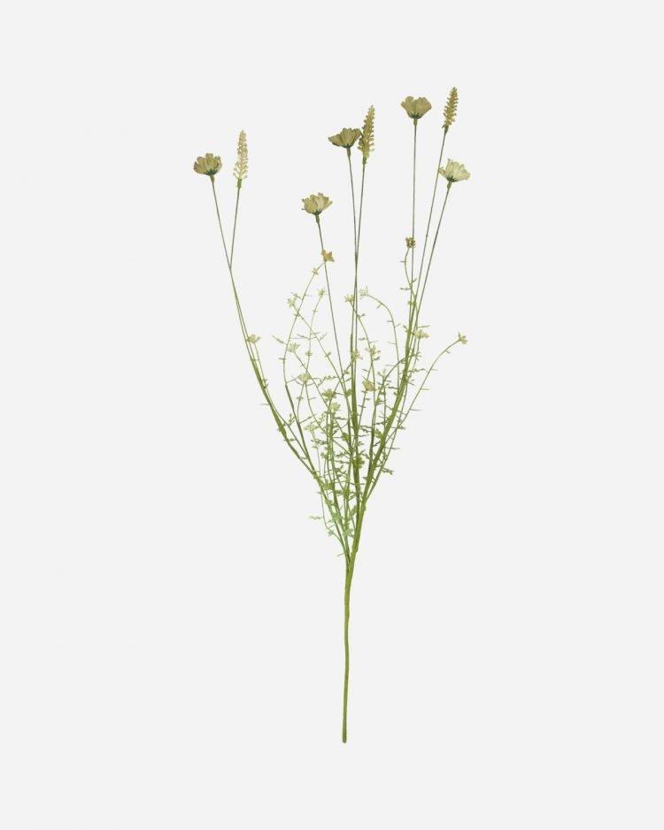 Trockenblumen, Beige
